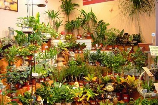 Сложно ли черенковать домашние растения и где есть возможность пообщаться с бывалыми растениеводами?